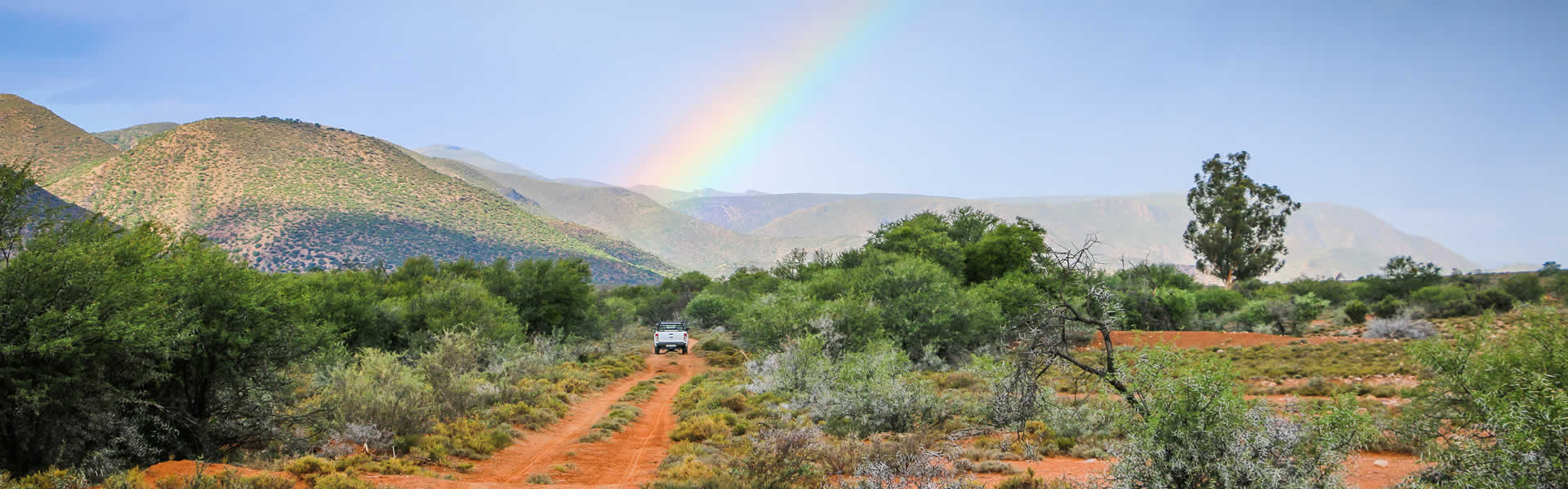 The Karoo says Thank You after some rain